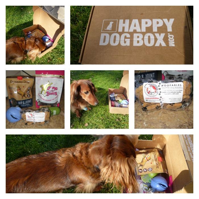 happy dog box Collage