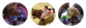 Pet clothes reviews: Simply Spoiled