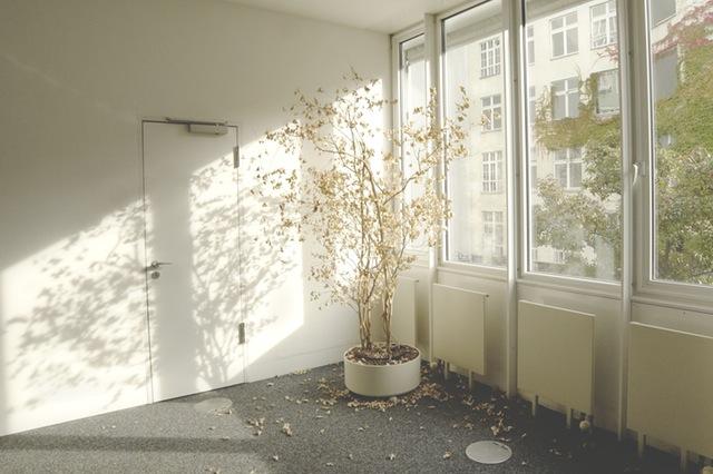 pexels-photo-25232