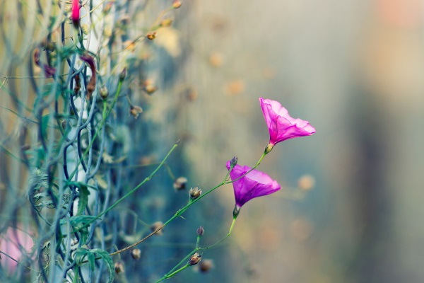 Wildflowers, Love Letters and a Man on the Mountain