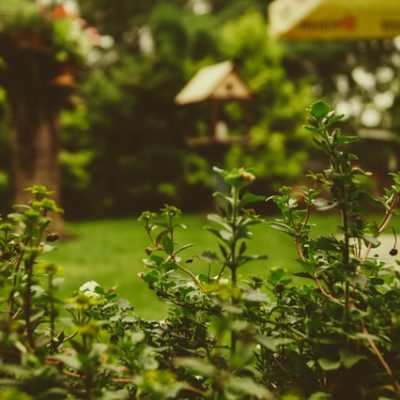 How To Renovate The Garden And Enjoy Doing It
