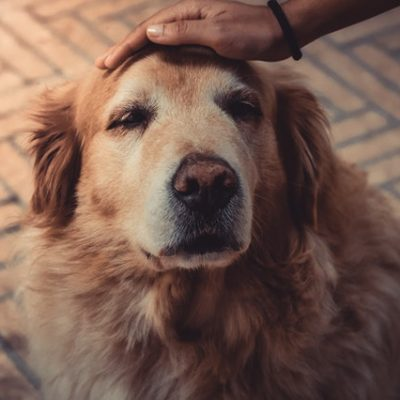 How To Cope With Losing Your Dog