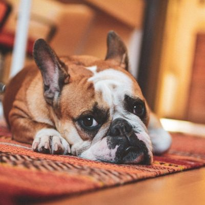 Got Furry Roommates? : Here are Critical Features you need to check for before Buying a House