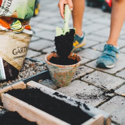 Things You Can Do Right Now To Make Your Home Garden A Better Place