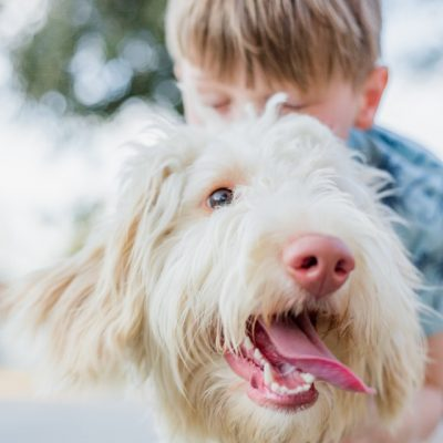 5 Dental Issues That Could Affect Your Dog