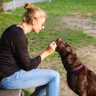 6 Mistakes That Keep You from Saving Money on Pet Expenses