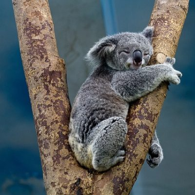 2019's Top Destinations for Family travel in Australia