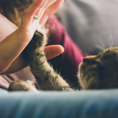 Pets in Apartments: How to do it Right