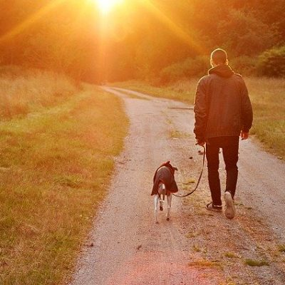 Amazing Ideas to Help You be the Best Pet Owner
