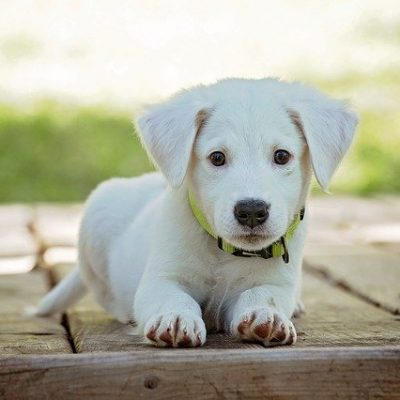 5 Ways To Ensure Your New Puppy Is Happy And Healthy