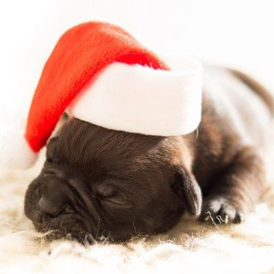 Simple Ways To Survive Your First Christmas With A New Pet
