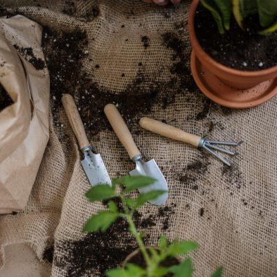 New Ideas To Refresh Your Garden