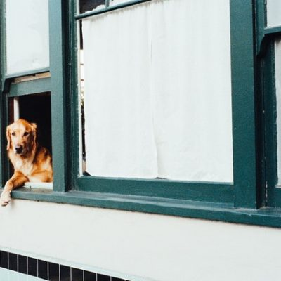 Does Your Dog Have Separation Anxiety? Read This!